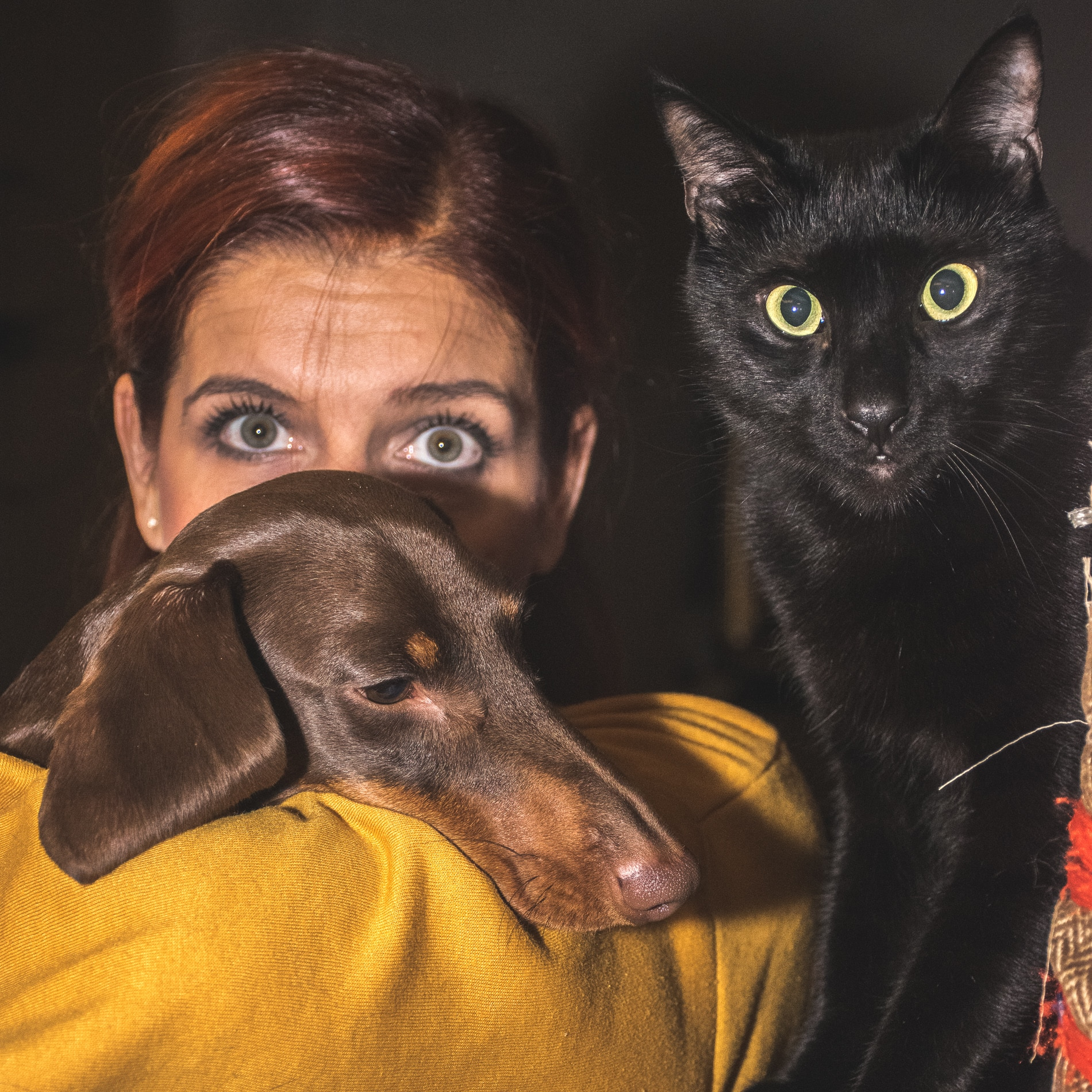 premi-per-cani-e-gatti-come-scegliere-i-migliori-pet-food-contemporaneo-food