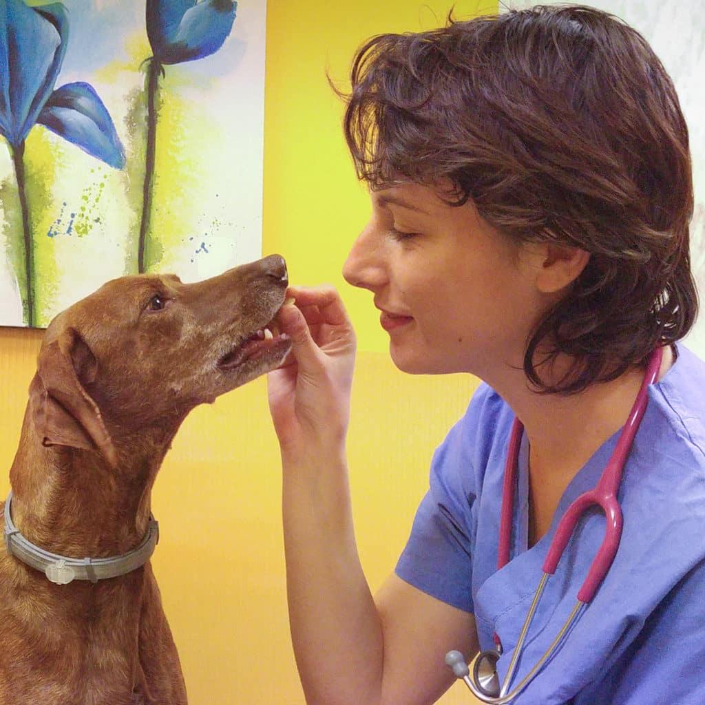 Natalia-Russo-medico-veterinario-nutrizionista-torino-diete-bestiali-contemporaneo-food