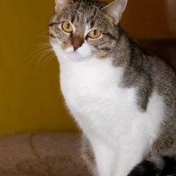 gatto-anziano-problematiche-medico-veterianrio-comportamentalista-torino-Raffaella-Bestonso-contemporaneo-food